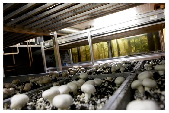 champignonkelder